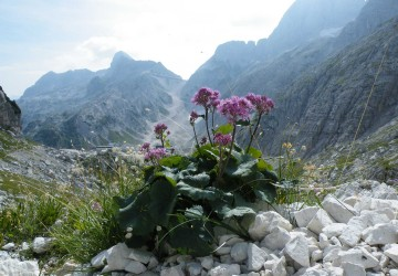 Rifugio Gilberti – Bivacco Marussich
