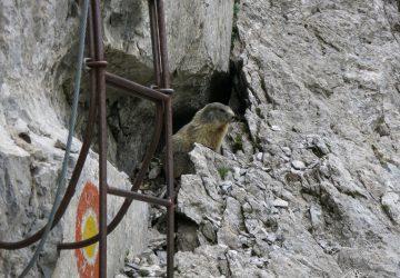 Ferrata degli Alpini al Zuc della Guardia e salita sul monte Pizzul.